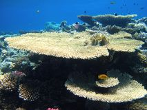 Nice different shape coral reefs and fish in red sea, Egypt stock photo
