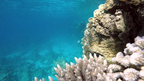 Beautiful coral reef. Life in the ocean. Coral reef. Exotic fishes. The beauty of the underwater world. Life in the ocean. Diving on a tropical reef. Submarine stock video footage