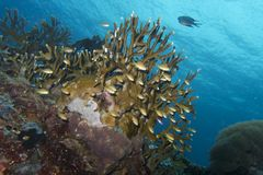Beautiful Coral Reef Life off Padre Burgos, Leyte, Philippines Stock Photos