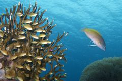 Beautiful Coral Reef Life off Padre Burgos, Leyte, Philippines Stock Photo