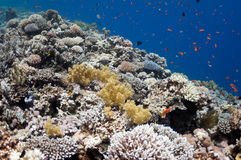 Beautiful coral reef near the Dahab city of Egypt Stock Photography