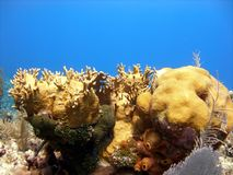 A beautiful coral reef scene Stock Photography