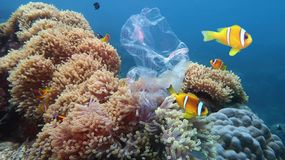 Beautiful coral reef with sea anemones and clownfish polluted with plastic bag stock images