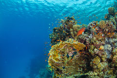 Beautiful coral reef with sealife. Underwater landscape photo with fish and marine life stock photography