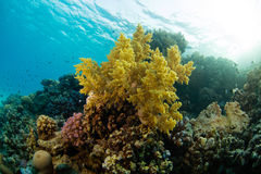 Beautiful coral reef with sealife. Underwater landscape photo with fish and marine life stock image