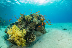 Beautiful coral reef with sealife. Underwater landscape photo with fish and marine life royalty free stock photography