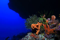 Beautiful coral reef Stock Photography
