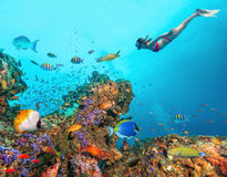 Beautiful coral reef with young freediver woman Royalty Free Stock Photo