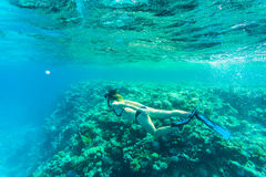 Beautiful coral reef with young freediver woman, underwater life. Copyspace for text Royalty Free Stock Image