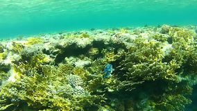 Beautiful coral. Tropical sea. Underwater life fish on the bottom. The corals and the caves. Corals. Fish and clear water. Tropical sea stock video