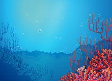 Beautiful corals under the sea Stock Photo