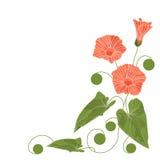 Beautiful corner floral arrangement. Vector illustration Stock Photo
