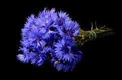 The beautiful cornflower on black background Royalty Free Stock Photography