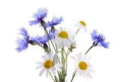 The beautiful cornflower and daisy isolated Stock Photos