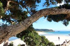 The beautiful Coromandel peninsula. On the east coast of the peninsula in New Zealand Stock Image
