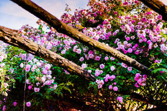 Beautiful Country House Garden Stock Photo