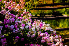 Beautiful Country House Garden Royalty Free Stock Photos