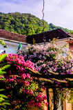 Beautiful Country House Garden Royalty Free Stock Photo