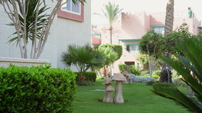 Beautiful country house with palm trees.  stock video footage