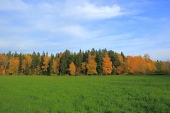 Beautiful country landscape in a autumn day. Green orange trees and still green grass field. royalty free stock photography