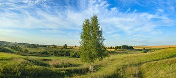 Sunny summer panorama with lonely growing birch tree. royalty free stock photography