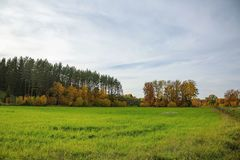 Free Beautiful Country Landscape In A Autumn Day. Green Orange Trees And Still Green Grass Field. Stock Image - 128778471