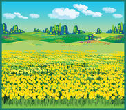 Beautiful country landscape with tulips royalty free illustration
