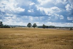 A beautiful country landscape with a wheat fields stretching into distance. Inspiring rural scenery at the end of summer stock images