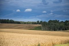 A beautiful country landscape with a wheat fields stretching into distance. Inspiring rural scenery at the end of summer royalty free stock images