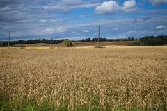 A beautiful country landscape with a wheat fields stretching into distance. Inspiring rural scenery at the end of summer royalty free stock image
