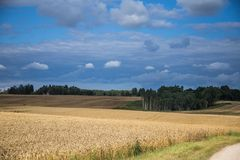A beautiful country landscape with a wheat fields stretching into distance. Inspiring rural scenery at the end of summer royalty free stock photography
