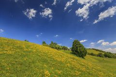 Beautiful country meadow with deep blue sky Stock Images