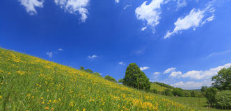 Beautiful country meadow with deep blue sky Royalty Free Stock Photography