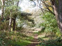 Beautiful country pathway with light green leaves autumn trees Stock Photos