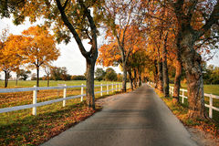 Beautiful country road in autumn Stock Images