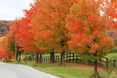 Beautiful country road in autumn foliage Stock Photo