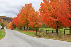 Beautiful country road in autumn foliage Stock Photos