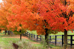 Beautiful country road in autumn foliage Royalty Free Stock Image