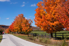 Beautiful country road in autumn foliage Royalty Free Stock Images