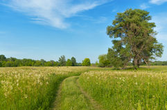 Beautiful country road, green meadow Royalty Free Stock Image