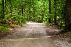Beautiful country road that runs along a forest Stock Image