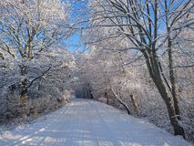 Beautiful country road between trees in snowy winter Stock Image
