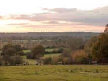 Beautiful country scene fields trees horizon sky red autumn sun Royalty Free Stock Photos