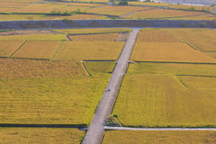 Beautiful country scenery of rice paddy Royalty Free Stock Image