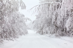 Beautiful country winter road Royalty Free Stock Photography