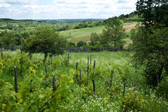 Beautiful countryside. Rolling hills, grapevines,  trees and flowers Stock Photography