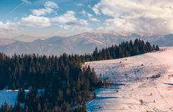 Beautiful countryside with conifer forest. Lovely landscape in mountains on a bright winter day Royalty Free Stock Photo