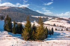 Beautiful countryside with conifer forest. Lovely landscape in mountains on a bright winter day Royalty Free Stock Photos