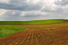 Beautiful countryside field Royalty Free Stock Image