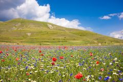 Beautiful Countryside In Summer With Fields Of Wild Flowers Royalty Free Stock Photography